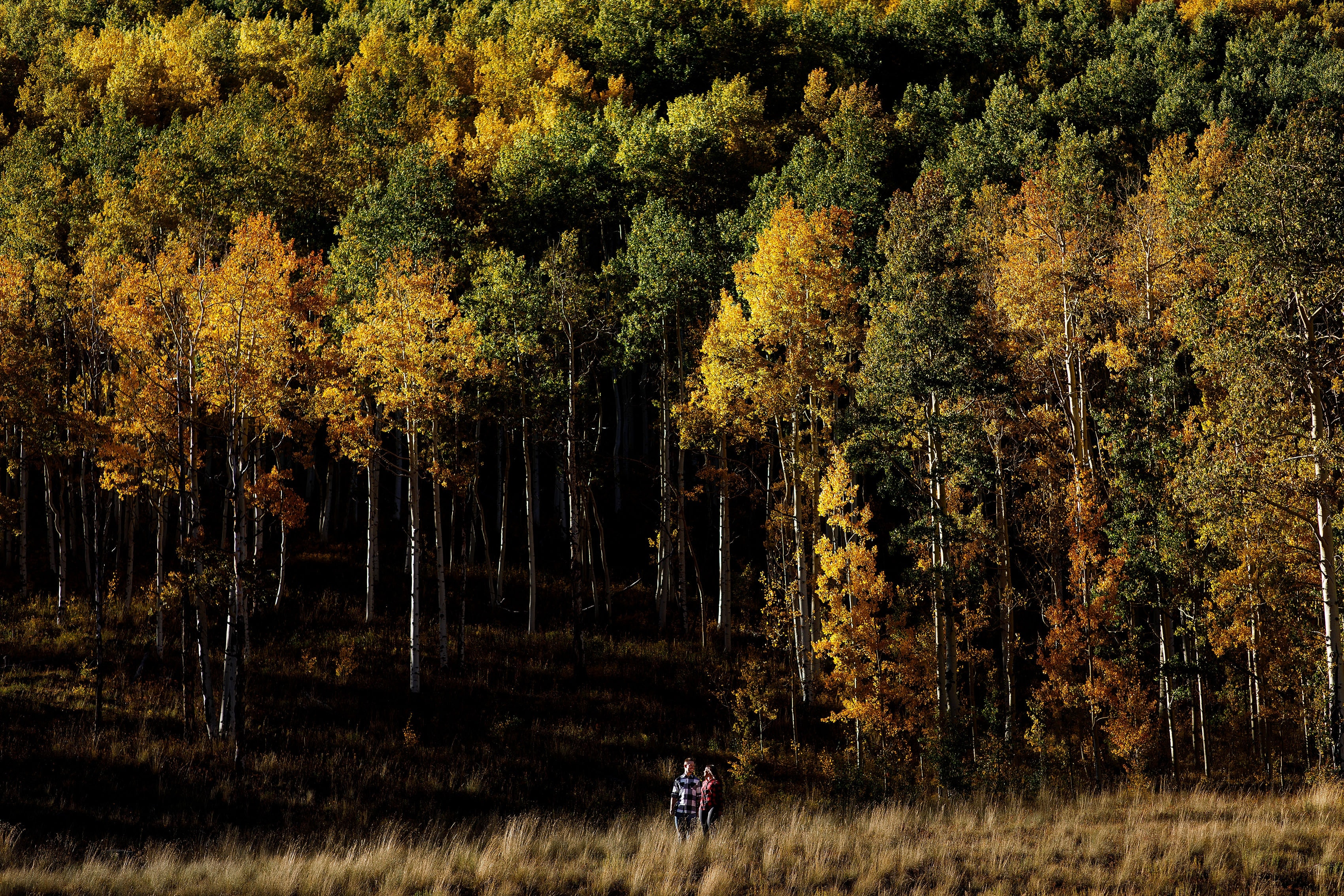 Caroline and Brendan walk together near a grove of colorful aspen trees at Piney River Ranch