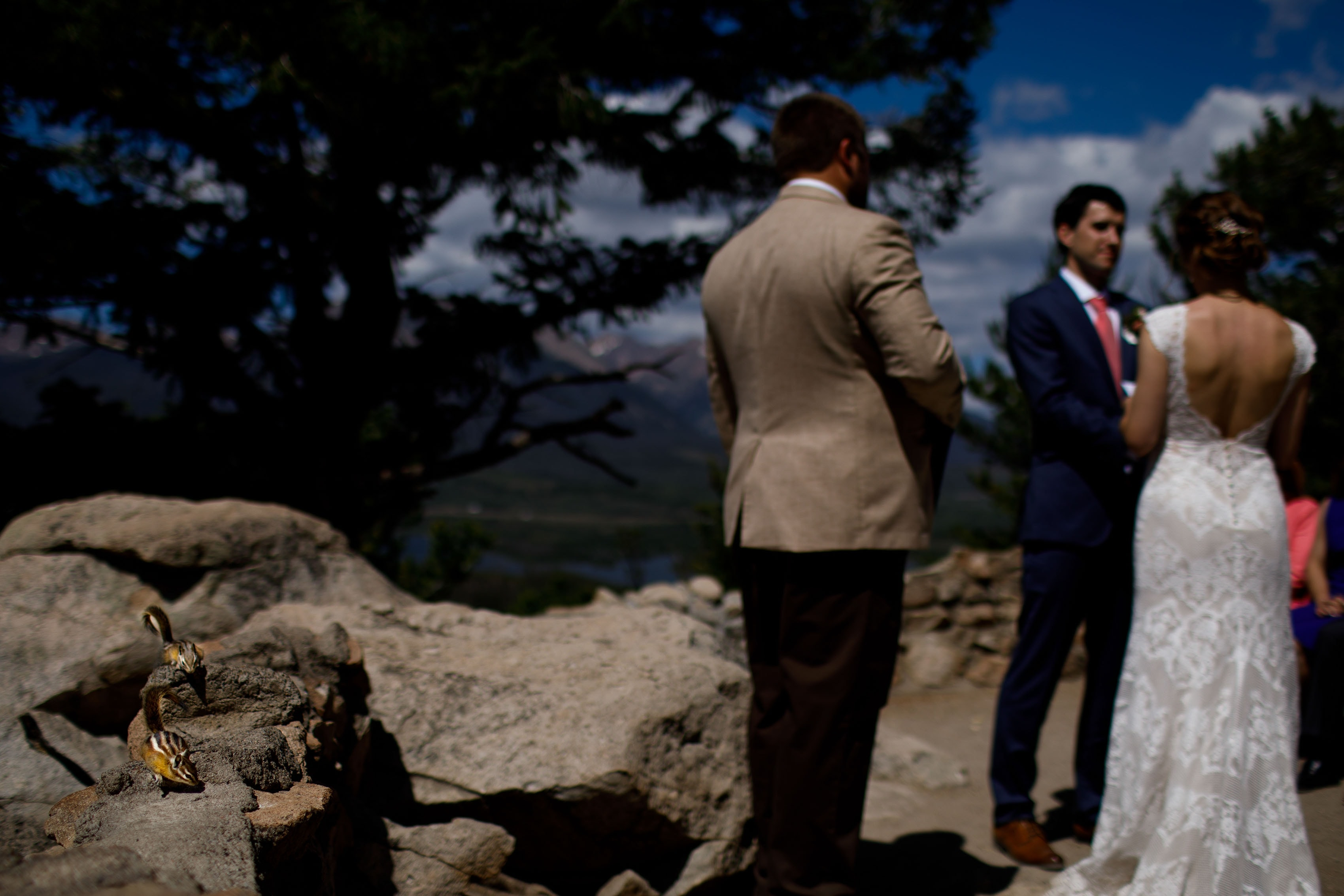 Chipmunks search for food during a wedding ceremony at Sapphire Point