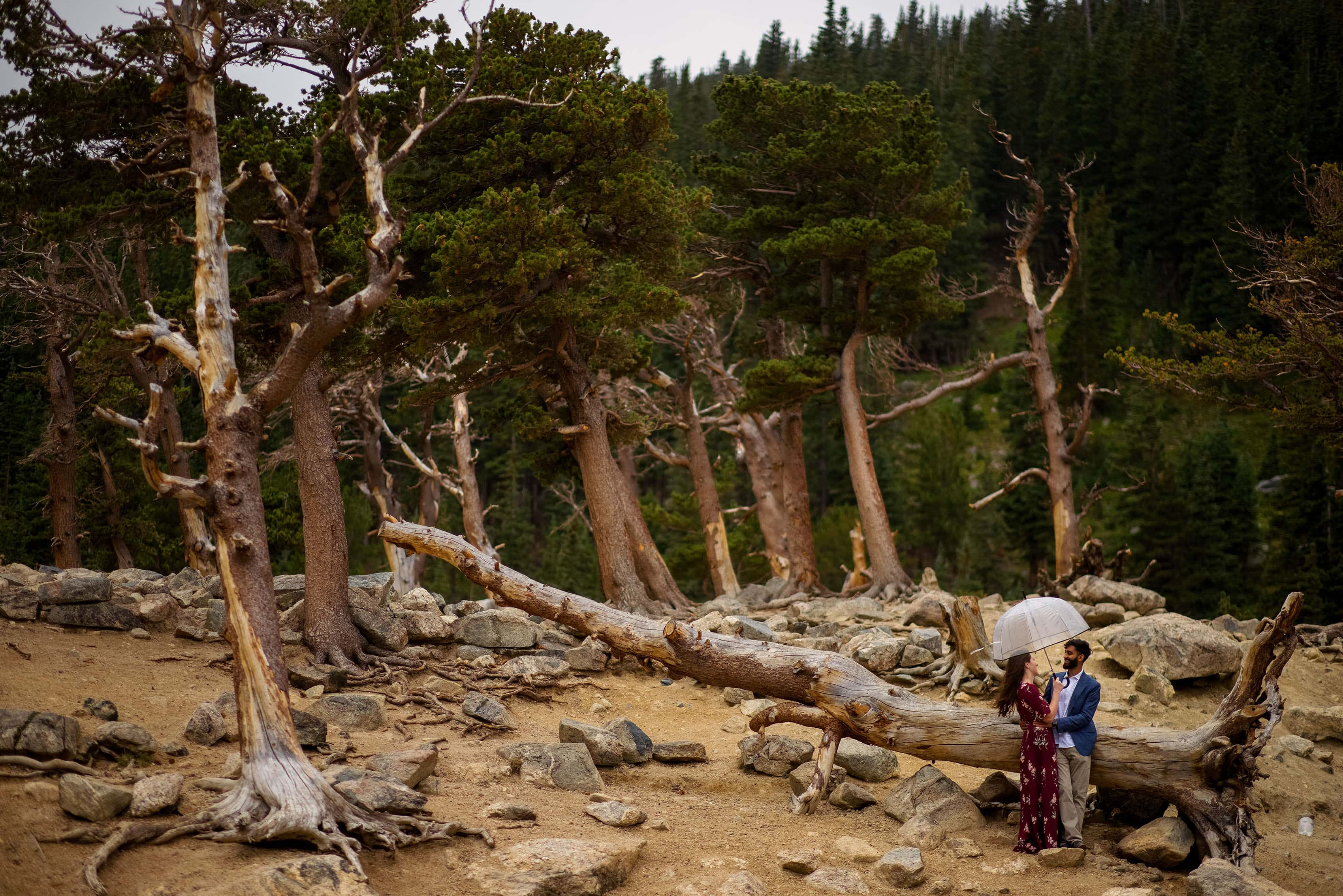 A couple stand in a grove of windblown trees at St. Mary's Glacier